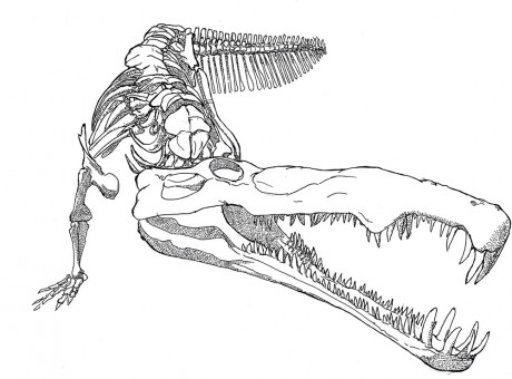 Phytosaurus are not really crocodiles