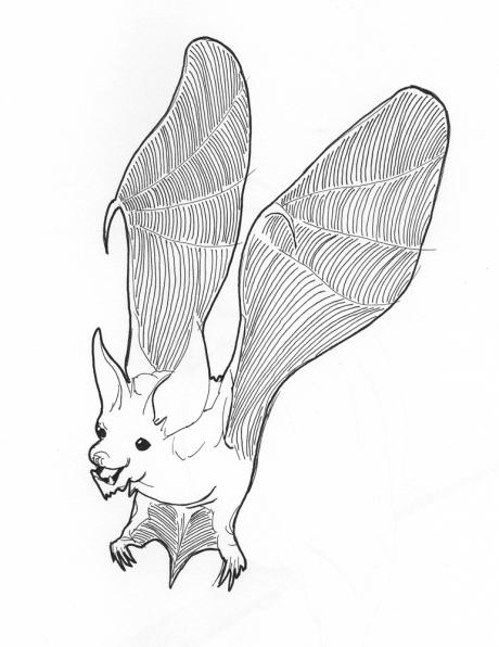 Bat! Look at its smiling happy face!