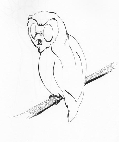Look, An Owl