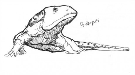 A Pederpes from the Carboniferous.