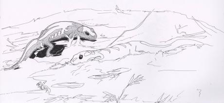 Salamander on a log
