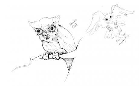 Staring crazy owl